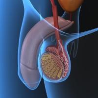 поражение органов мошонки при гонорее