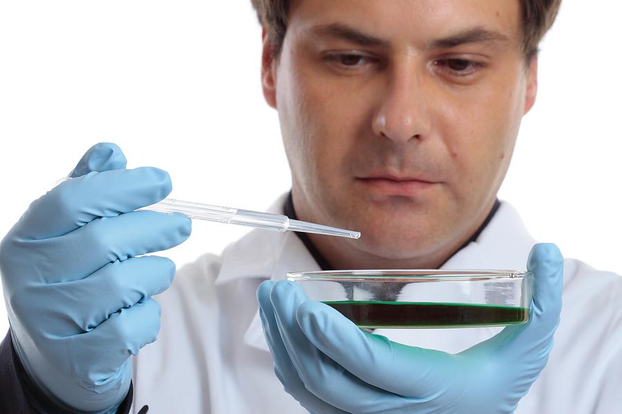 лаборант проводит оценку посева на ИППП