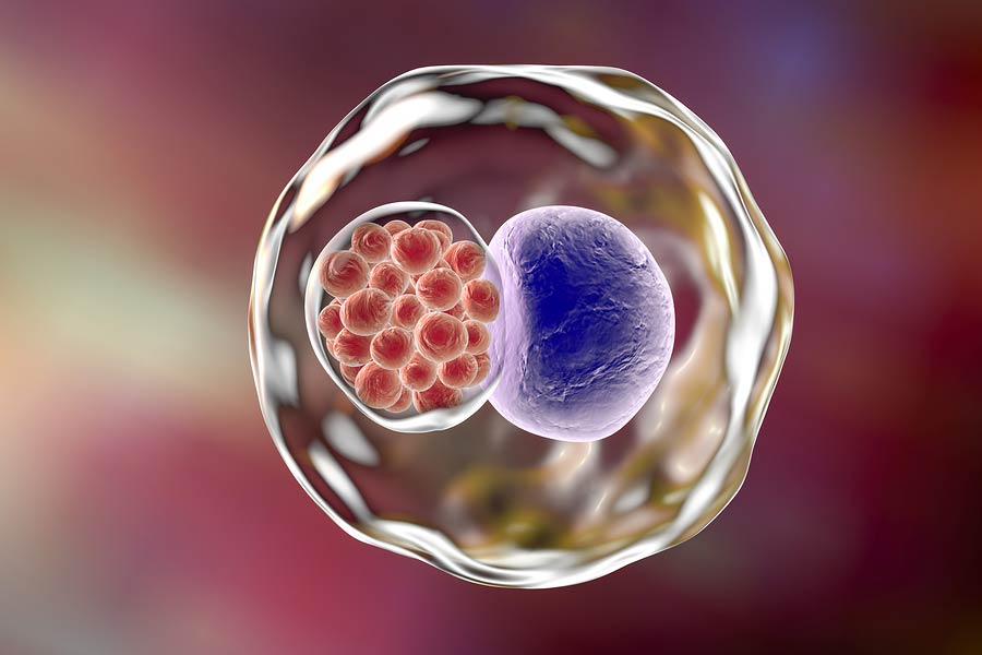внутриклеточная форма хламидий